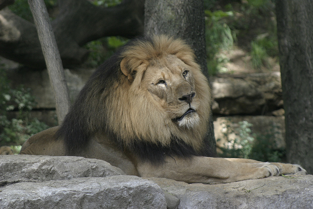 How much is the henry doorly zoo best zoo in the world 2018 henry doorly zoo s best image konpax 2017 publicscrutiny Image collections